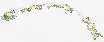 Cartoon Of Frog Sitting On Water Lily And Frogs Jumping Poster