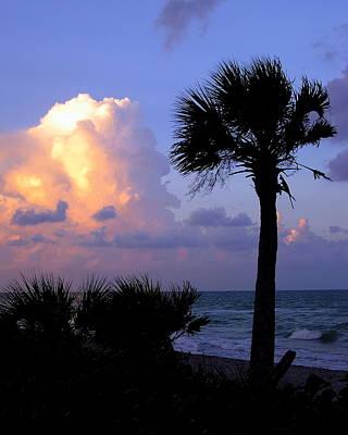 Casperson Beach Sunrise With Palm Poster