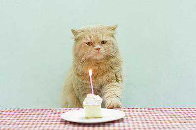 Cat About To Bllow A Candle Poster