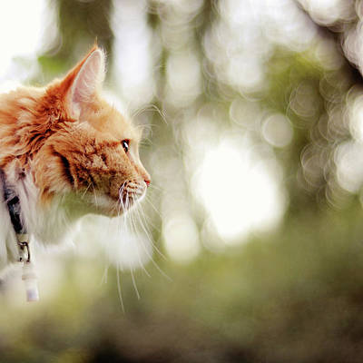 Cat And Bokeh Background Poster by Maria Kallin