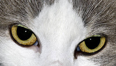 Poster featuring the photograph Cat Eyes by David Lester