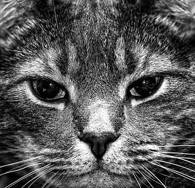 Cat Face In Black And White Poster