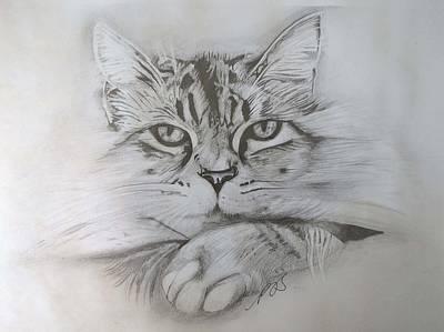 Cat I. Poster