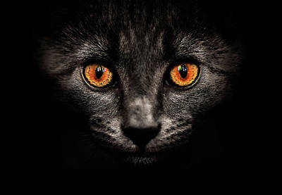 Cat In Shadows. Poster