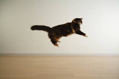 Cat Jumping In Air Poster