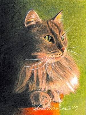 Cat Miniature Poster