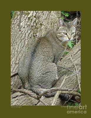 Poster featuring the photograph Cat On A Log-ii by Patricia Overmoyer