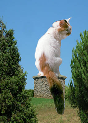 Poster featuring the photograph Cat On Pedestal by Bonnie Muir