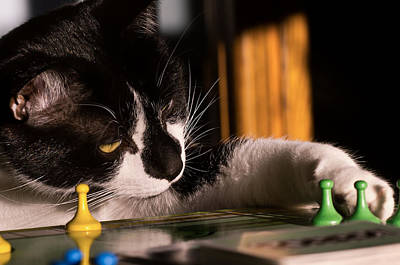 Cat Playing A Game Poster