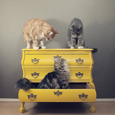 Cats Sitting On Cabinet Poster