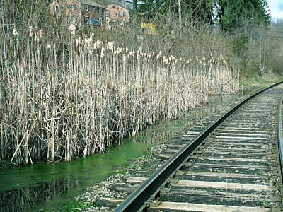 Cattails By The Tracks Poster