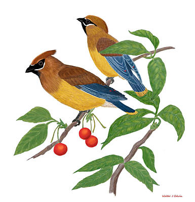 Poster featuring the digital art Cedar Waxwing by Walter Colvin