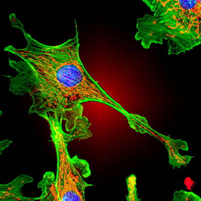 Cell Structure Poster