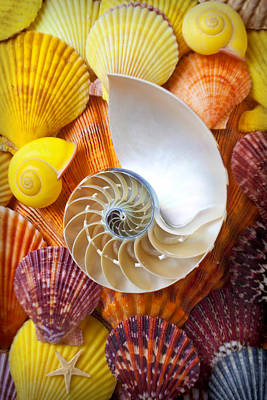 Chambered Nautilus  Poster by Garry Gay