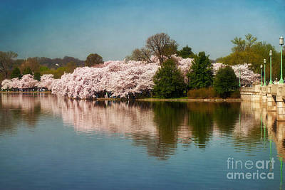 Cherry Blossoms Along The Tidal Basin Eight Poster by Susan Isakson