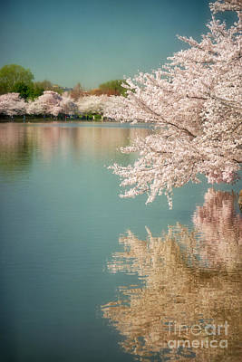 Cherry Blossoms Along The Tidal Basin Two Poster by Susan Isakson