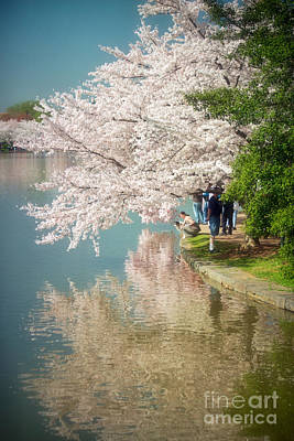 Cherry Blossoms On The Edge Of The Tidal Basin Poster by Susan Isakson