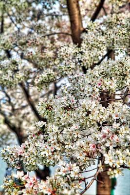 Cherry Blossoms Washington Dc 2 Poster