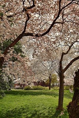 Cherry Blossoms Washington Dc 5 Poster