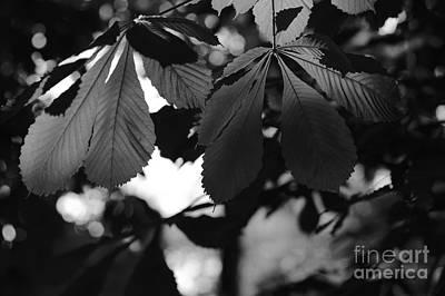 Chestnut Leaves Poster by Dariusz Gudowicz