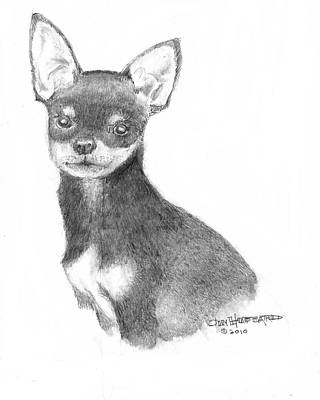 Poster featuring the drawing Chihuahua by Jim Hubbard