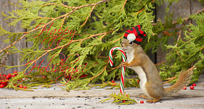 Christmas Squirrel. Poster