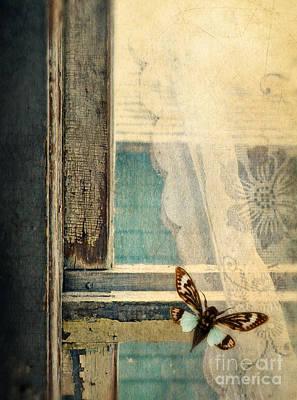 Cicada On Window Poster