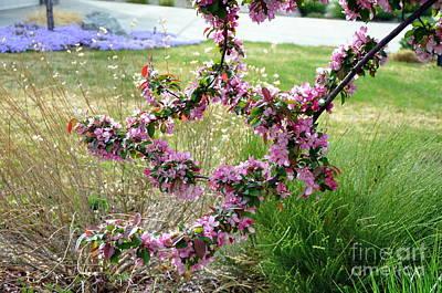 Circle Of Blossoms Poster