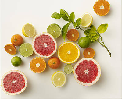 Citrus Variety Poster by Carin Krasner