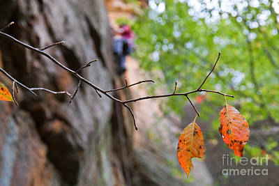 Climber In Fall Poster