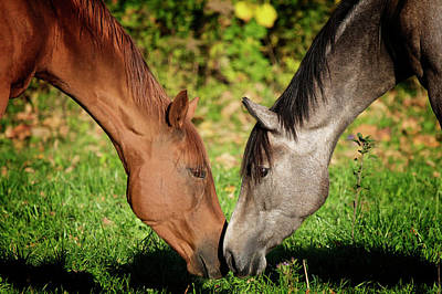 Close Up Of Horses Poster by Ryan Courson Photography