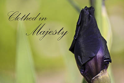 Clothed In Majesty Poster by Christopher Gaston