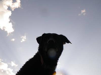 Cloud Dog  Poster by John Harrison