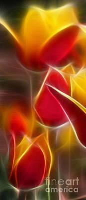 Cluisiana Tulips Triptych Panel 1 Poster by Peter Piatt