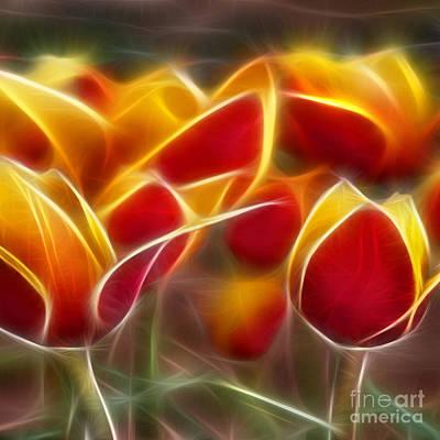 Cluisiana Tulips Triptych Panel 2 Poster by Peter Piatt