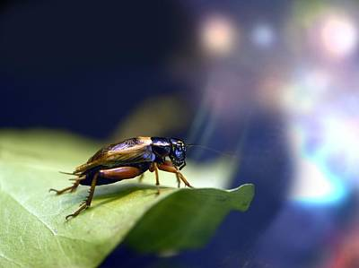 Cockroach On A Leaf Poster