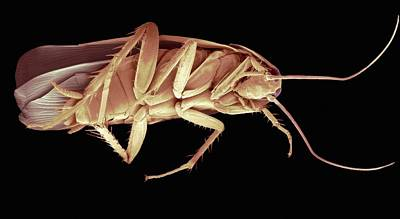 Cockroach, Sem Poster