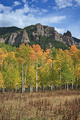 Poster featuring the photograph Colorado Aspens In Fall by Drusilla Montemayor
