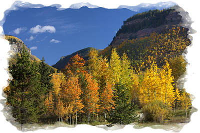 Colorado Aspens Poster