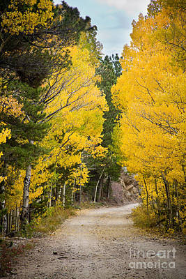 Colorado Rocky Mountain Aspen Road Portrait  Poster by James BO  Insogna