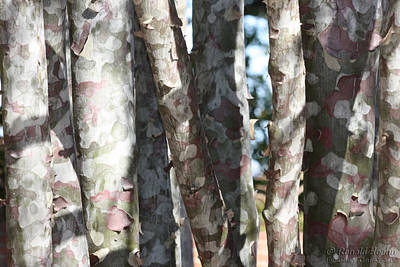 Colorful Bark Poster