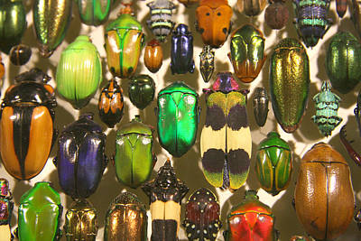 Poster featuring the photograph Colorful Insects by Brooke T Ryan