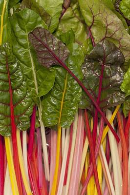 Colorful Rainbow Swiss Chard Calgary Poster