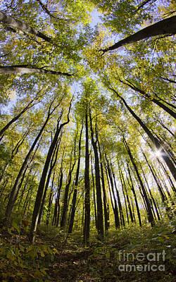 Colorful Trees In Shenandoah National Park Poster