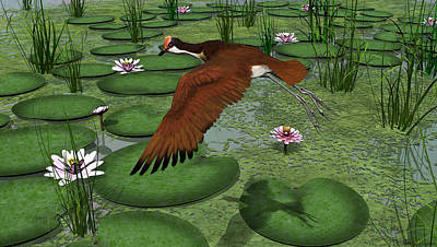 Comb-crested Jacana Poster by Walter Colvin