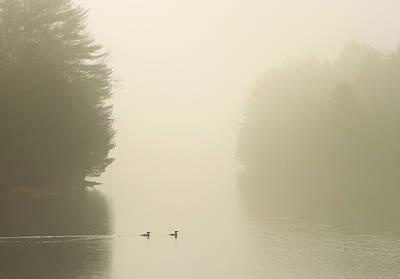Common Mergansers In Morning Fog Poster by John Burk
