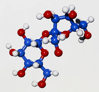 Computer Graphic Of A Molecule Of Sucrose Poster