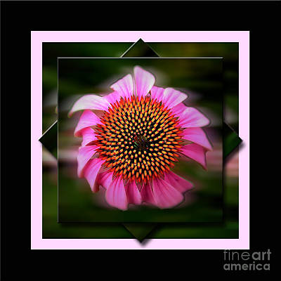 Coneflower Geometric Poster by Sue Stefanowicz