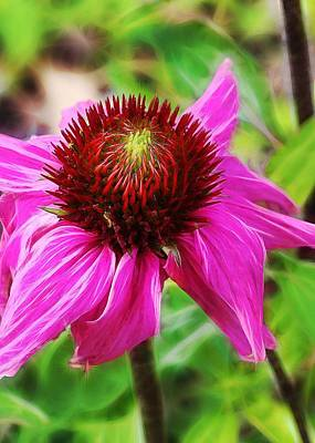 Poster featuring the photograph Coneflower by Judi Bagwell