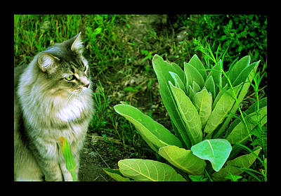 Poster featuring the photograph Contemplating The Nature Of Mullein by Susanne Still